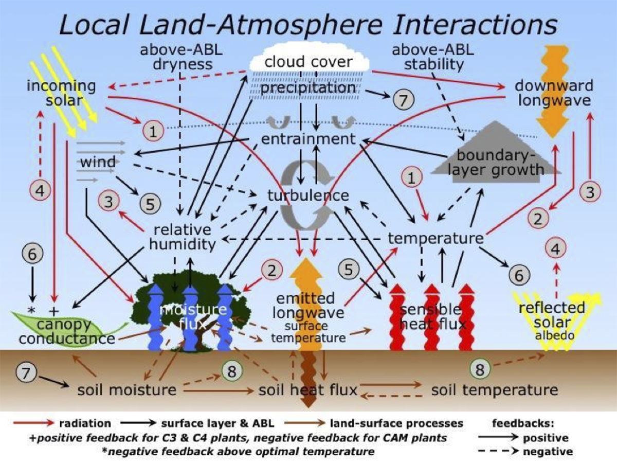 Important local land-atmosphere interactions
